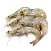 Shrimp 40-50